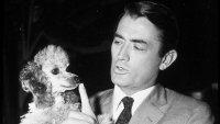 К столетию Грегори Пека: архивные снимки легенды Голливуда