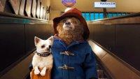 Кинотеатры возмутил перенос «Приключений Паддингтона 2» в России