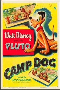 «Camp Dog»