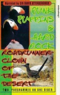 «Roadrunner»